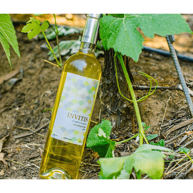 Sauvignon Gris - Single Vineyard