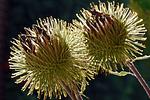 Esta flor la responsable del manso invento! ¿Sabes cuál fue?