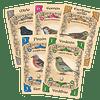 Pájaros Cantores - Juego de Mesa - Español