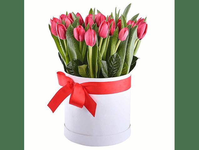 Caja Box 20 Tulipanes
