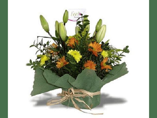 Liliums y Maules en Base Malla