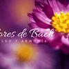 Gomitas Healthy Flores De Bach